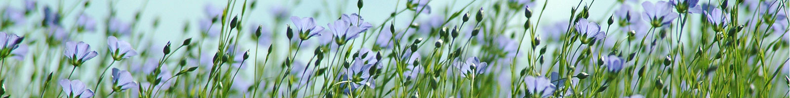 Linseed essential oil – Source of Lipids as Active Ingredients for Pharmaceuticals and Nutraceuticals.